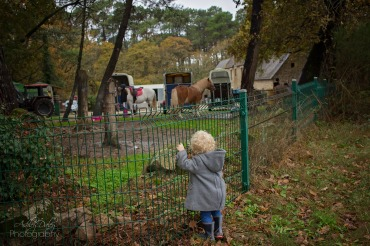 She loved the nearby horses
