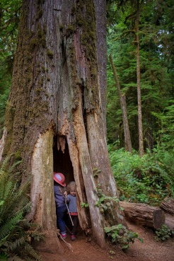 Northern Olympic Peninsula with Kids (12)