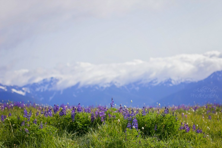 Northern Olympic Peninsula with Kids (6)