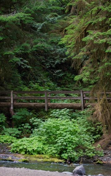 The log bridge