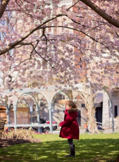 Enjoying the pretty blossoms