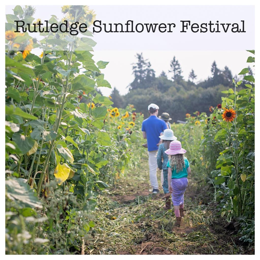 Rutledge Family Farm Sunflower Festival
